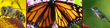 PollinatorLogo-Facebook